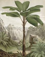 Banana tree fotobehang Kek Amsterdam York Wallcoverings