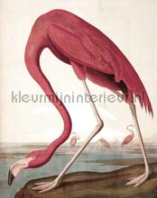 Flamingo photomural Kek Amsterdam world maps