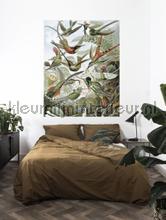 Exotic birds fottobehaang Kek Amsterdam _intrieur