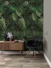 Monstera photomural Kek Amsterdam all images
