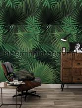 Palm fottobehaang Kek Amsterdam _intrieur