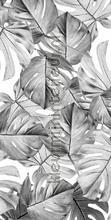 monstera photomural wp-583 Flowers - Plants Kek Amsterdam