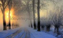 Winterochtend fotobehang Noordwand Holland 0007