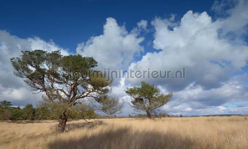 Hoge Veluwe photomural 0114 Holland Noordwand