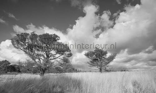 Hoge Veluwe photomural 0117 Holland Noordwand