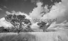 Hoge Veluwe fotobehang Noordwand Holland 0117