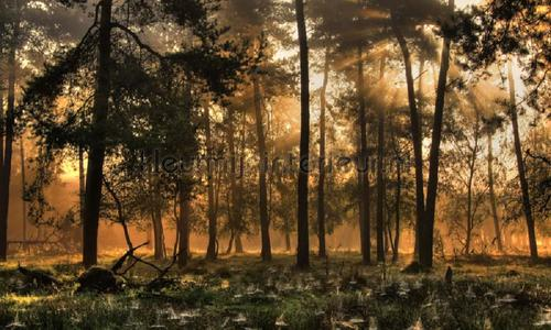 Herfstochtend photomural 0224 Holland Noordwand