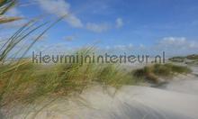 Schiermonnikoog duinen 2 photomural Noordwand Holland 0487