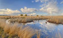 Hoge Veluwe photomural Noordwand Holland 0677