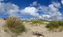 Noordwijk duinlandschap photomural Noordwand Holland 1434