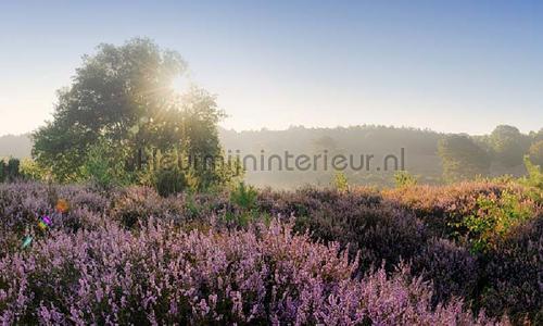 Posbank zonsopgang photomural 1823 Holland Noordwand