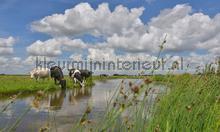 Koeien langs de sloot photomural Noordwand Holland 2128