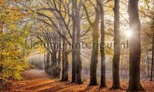 Beukenlaantje herfst fotomurali Noordwand Holland 2144