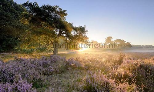 Ederheide zonsopgang photomural 2152 Holland Noordwand