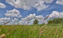 Eemland grasland fotobehang Noordwand Holland 2166