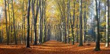 Beukenlaantje herfst 2 fotomurali Noordwand Holland 2201