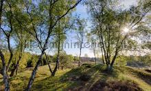 Berkenbossen bij de Mossel fotomurali Noordwand Holland 3495