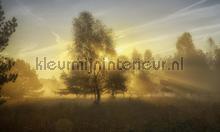 Herfstochtend 2 fotobehang Noordwand Holland 4611