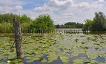 Loosdrecht 2 photomural Noordwand Holland 4624