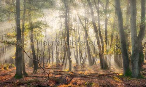 Mistig herfstbos photomural 4707 Holland Noordwand