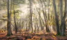 Mistig herfstbos fotobehang Noordwand Holland 4707