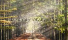 Beukenlaantje in de herfst fotomurali Noordwand Holland 4714