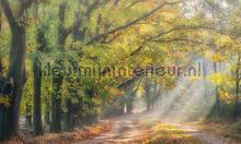 Boslaantje in de herfst fotomurali Noordwand Holland 4783