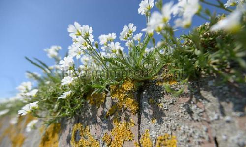 Muurbloemen photomural 5090 Holland Noordwand