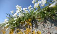 Muurbloemen fotobehang Noordwand Holland 5090