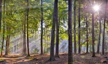 Sysselt ochtendmist fotomurali Noordwand Holland 5209