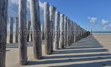 Strandpalen photomural Noordwand Holland 5520