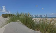 Duinen en zeepanorama photomural Noordwand Holland 5598