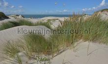 Duinen en zeepanorama 2 photomural Noordwand Holland 5602