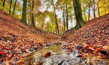 Bosbeek herfst fotomurali Noordwand Holland 6604