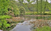 Hoge Veluwe vijver photomural Noordwand Holland 7575