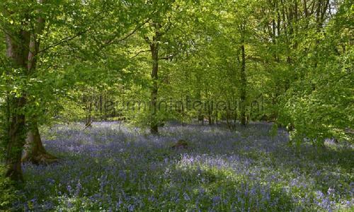 Bos met blauwe Lelies photomural 7659 Holland Noordwand