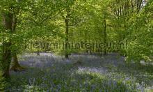 Bos met blauwe Lelies fotomurali Noordwand Holland 7659