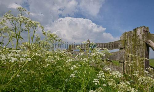 Eemland boerenhek photomural 9331 Holland Noordwand
