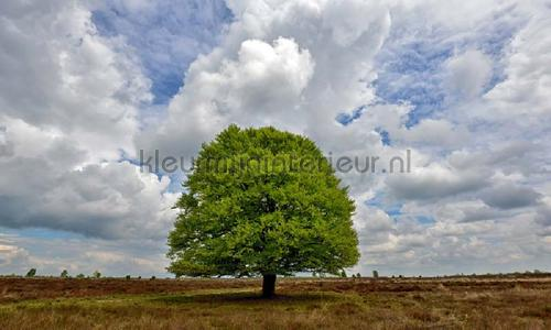 Beukenboom op de heide photomural 9621 Holland Noordwand
