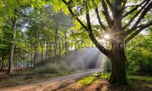 Beukenboom met bank fotobehang Noordwand Holland 9729