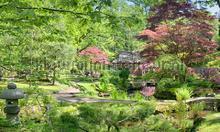 Japanse tuin fotobehang Noordwand Holland 9758