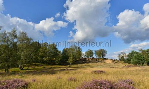 Veluwe Planken Warmbuis photomural 9903 Holland Noordwand