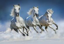 Arabian horses fotobehang Ideal Decor Ideal-Decor Poster 00162
