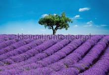 provence photomural Ideal Decor Ideal-Decor Poster 00144