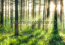 Sunset in the woods fotobehang Ideal Decor Bossen