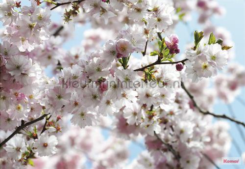 spring photomural 8-507 Imagine Edition 3 Stories Komar