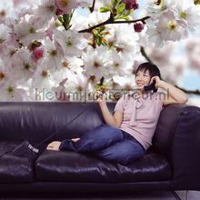 spring fotobehang 8-507 Imagine Edition 3 Stories Komar