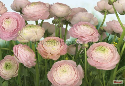 gentle rose fotobehang 8-894 Imagine Edition 3 Stories Komar