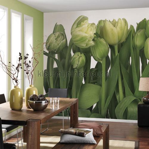 tulips fotobehang 8-900 Imagine Edition 3 Stories Komar