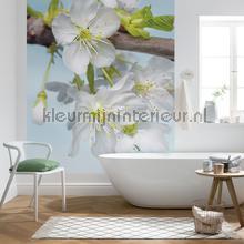 Blossom fotobehang Komar Imagine Edition 3 Stories